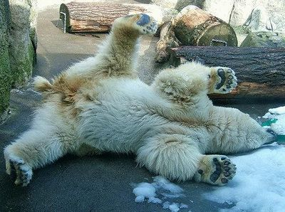 クマが釣られたり戦ったりあられもない格好したりする画像14