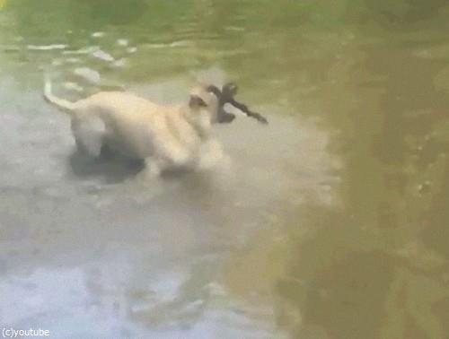 犬のスゴ技07
