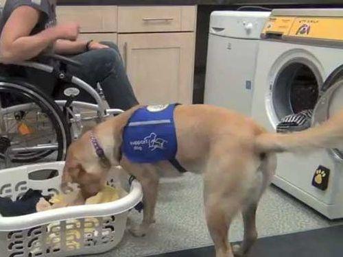 犬専用の洗濯機00