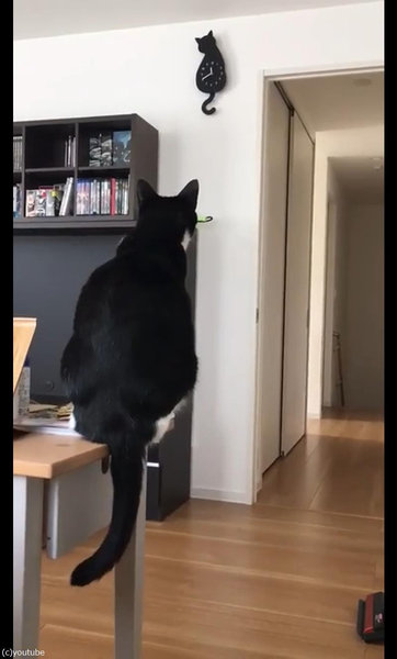 時計としっぽがシンクロする猫03