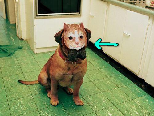 犬に猫マスク00