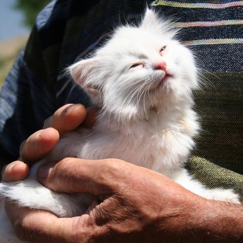 一日中猫を抱っこする仕事03