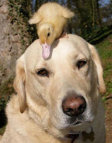 仲良しな動物たち10