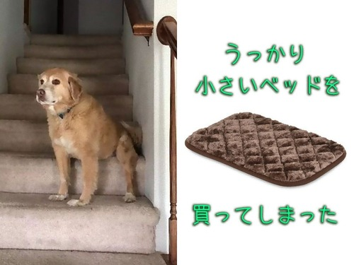 犬のベッドが小さい00