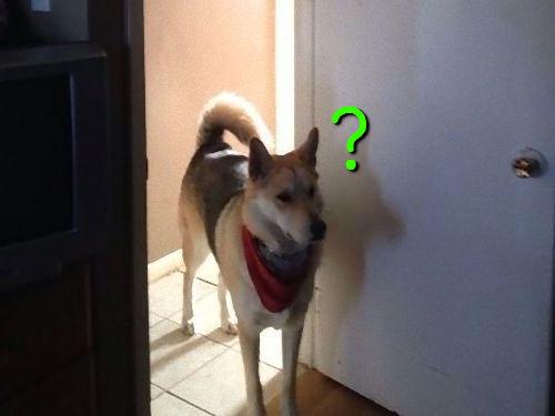 猫を探す犬00