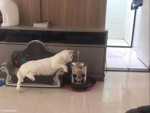 最も優雅に水を飲む猫02