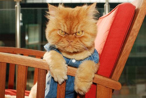 怒った猫15