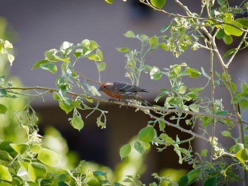 ウインドチャイムに鳥の巣08