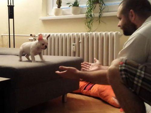 勇気ある子犬のジャンプ01