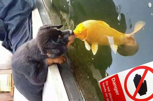 犬と魚の愛情03