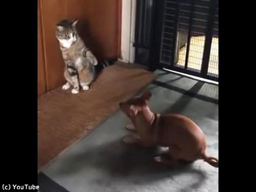 犬と猫のテンションの違い00