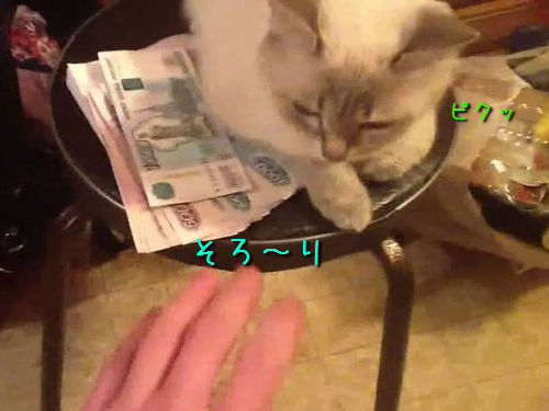 お金の番をする猫00