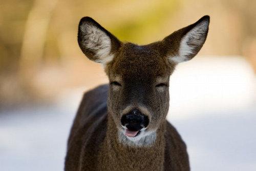 15スマイルや笑う動物