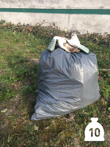 オランダの川辺をゴミ掃除08