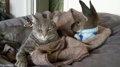 猫ちゃん大好きカンガルー01