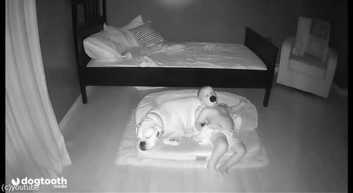 ベッドから降りて犬の隣で寝る赤ちゃん04
