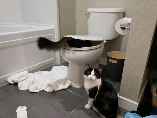 トイレと猫02