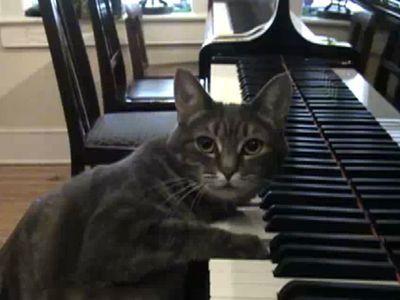 ピアノを弾く猫、ノラ