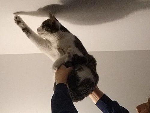 猫を手伝ってあげた02