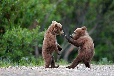クマが釣られたり戦ったりあられもない格好したりする画像01