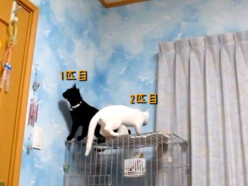 猫の登場の仕方