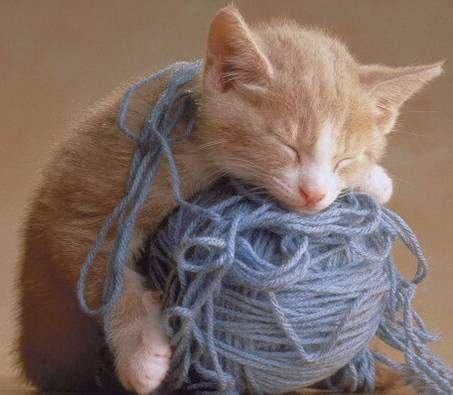 眠る猫12