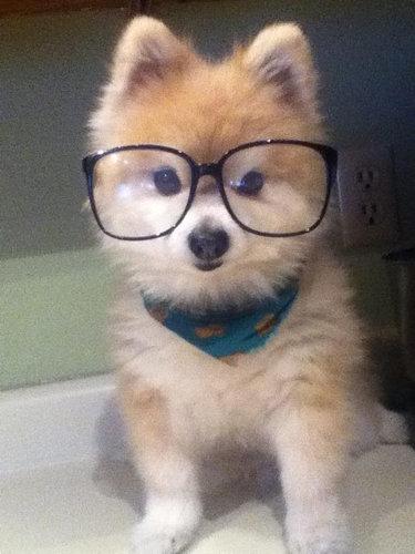 子犬に喜ぶ犬03