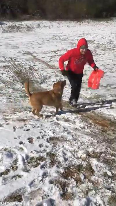 犬と一緒にそり遊び04