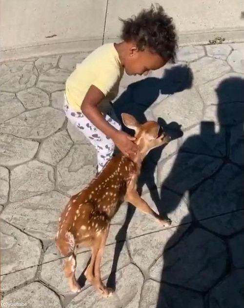 鹿の赤ちゃんが人間の赤ちゃんと出会った02