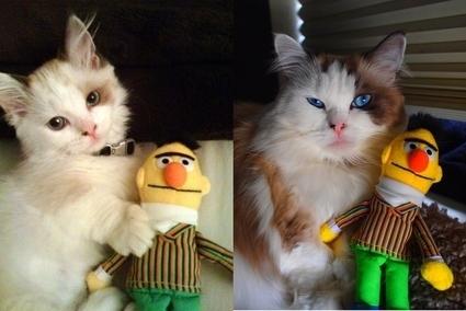 成長した猫15