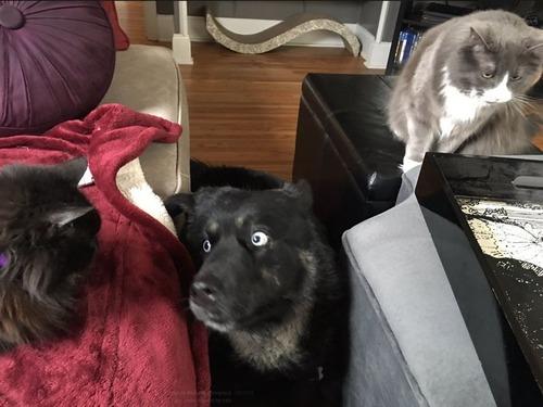 犬と猫の仲がよろしくないとき10