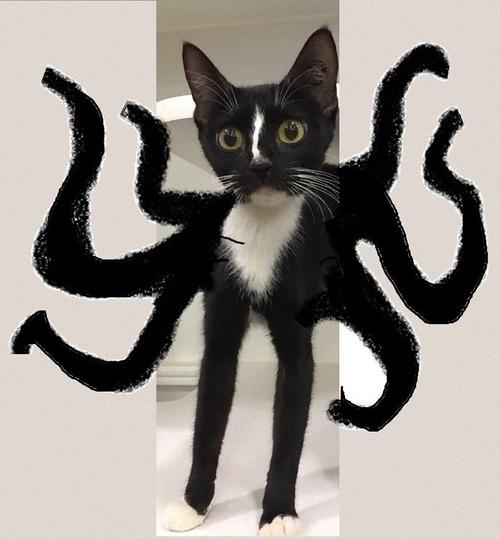 足の長い黒猫02
