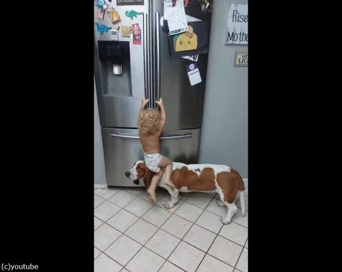 赤ちゃんを助ける犬01