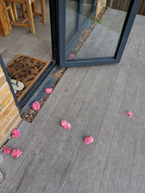 花を差し入れする猫07