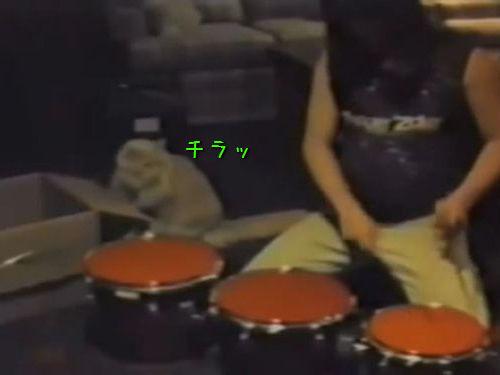 ドラムのお手本を見せる猫01