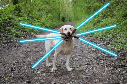 必殺技を使いそうな犬02