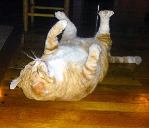 くしゃみ直前の猫13