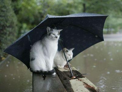 水害時にたくましく楽しむ人々10