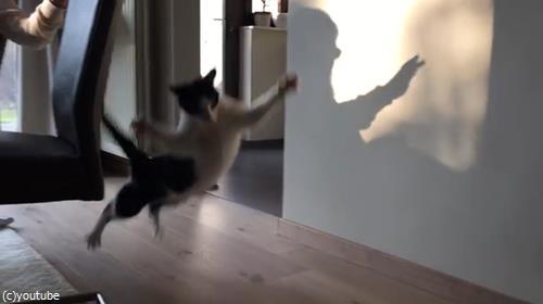 猫VS影絵04