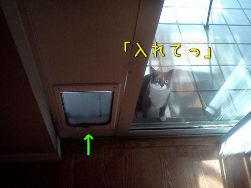 猫の謎の行動00