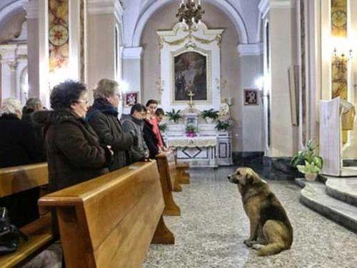 イタリアの忠犬00
