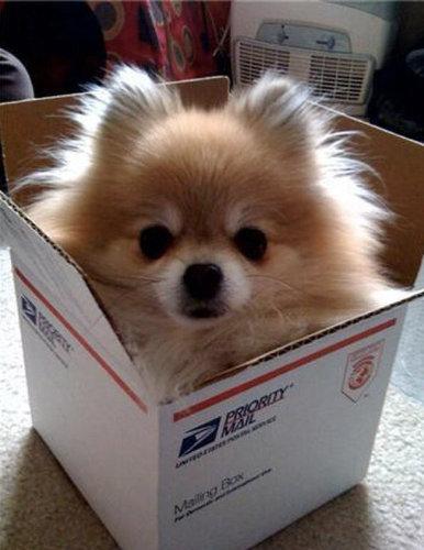 箱好きの犬02
