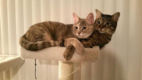 うちの猫はうちの彼女の猫のことが大好きだ01