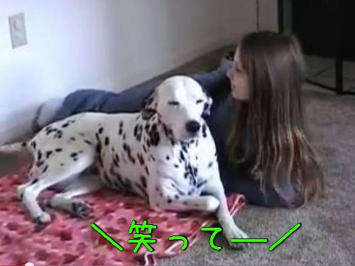 隣の犬がニッコリ00
