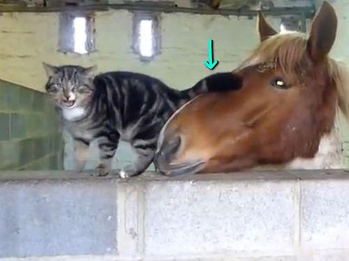 馬と猫が仲良し00