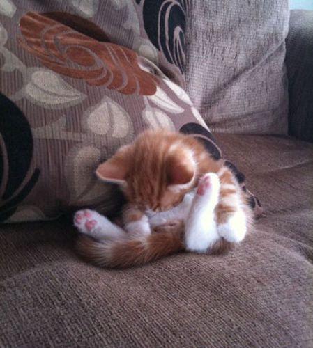 猫の寝方01