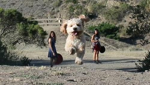 犬を巨大化する写真テクニック13