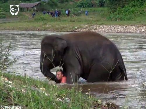 川に流された人間を助ける子ゾウ05