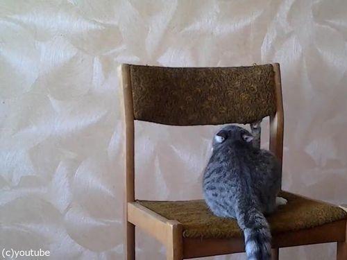 猫がイスでアクロバティック08