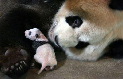 親子愛であふれる動物たち11